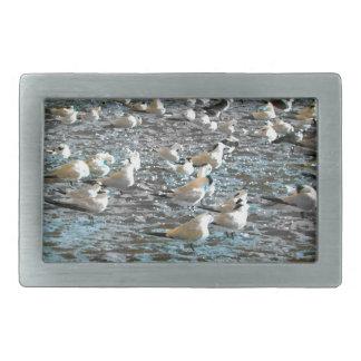 seagull beach birds painted blue theme florida belt buckle
