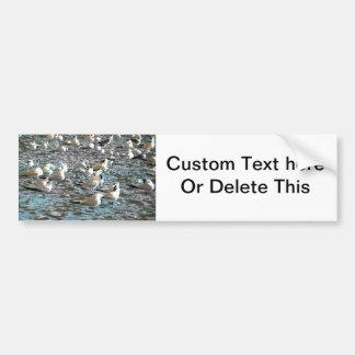 seagull beach birds painted blue theme florida bumper sticker