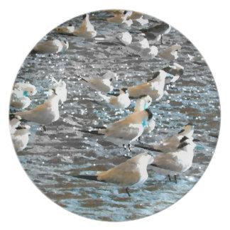 seagull beach birds painted blue theme florida plates