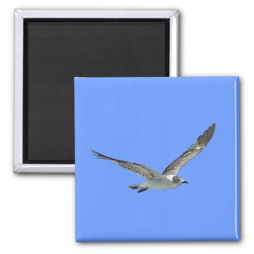 Seagull Bird 2 Inch Square Magnet