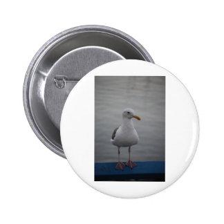 Seagull bird pinback buttons