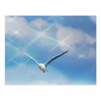 Seagull Bird in Flight Photo Post Cards
