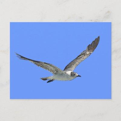 Seagull FAQ
