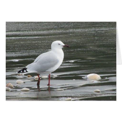 seagull birthday cards