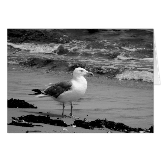 Seagull (Black and White) Card