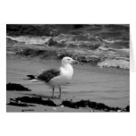 Seagull (Black and White) Greeting Card