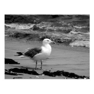 Seagull (Black and White) Postcard