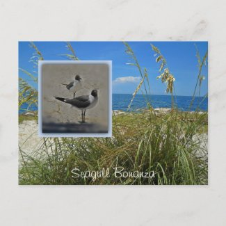 Seagull Bonanza Florida postcard or invitation