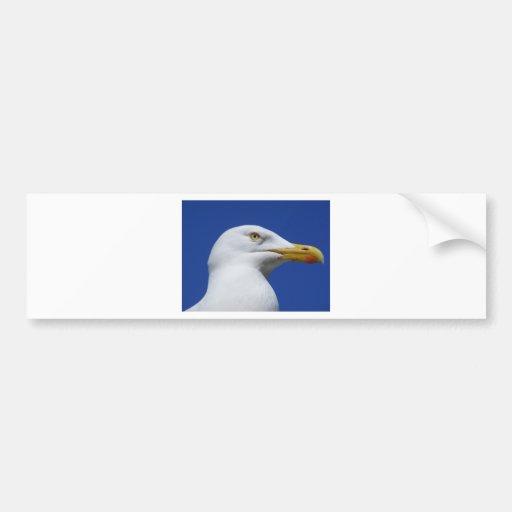 Seagull Bumper Stickers
