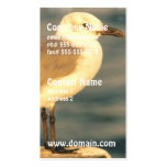 Seagull Business Cards