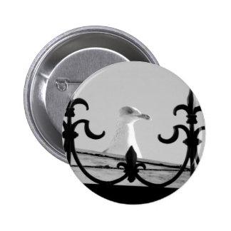 seagull button