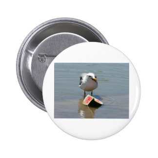 seagull pinback buttons