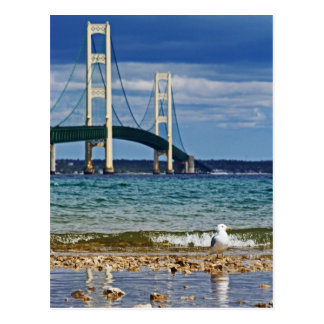 Seagull by Mackinac Bridge Post Cards