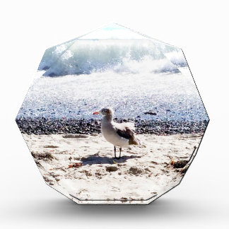 seagull by the ocean on the beach picture acrylic award
