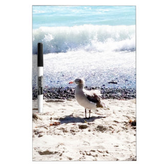 seagull by the ocean on the beach picture dry erase board