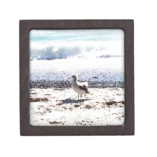 seagull by the ocean on the beach picture jewelry box