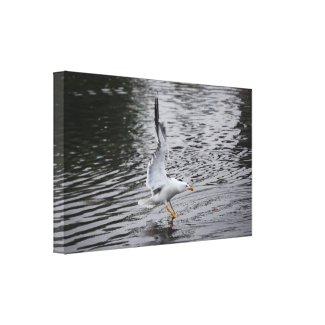 Seagull wrappedcanvas