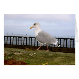 Seagull Card card