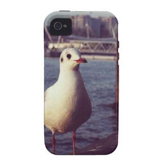 seagull Case-Mate iPhone 4 cover