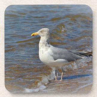 Seagull Coaster