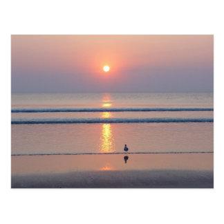 Seagull Daytona Beach FL Ocean Sunrise Postcard