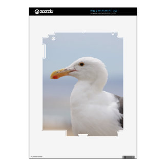 Seagull Decals For iPad 2