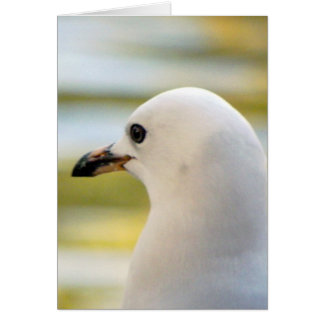Seagull Deep in Thought Card