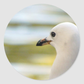 Seagull Deep in Thought Classic Round Sticker