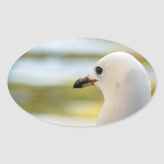 Seagull Deep in Thought Oval Sticker