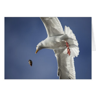 Seagull Dinner Greeting Cards