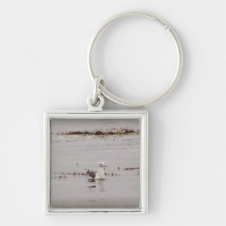Seagull Drifts Silver-Colored Square Keychain