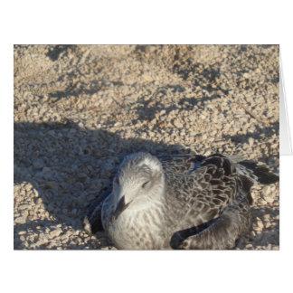 Seagull Enjoying The Sun Summer Photography Card