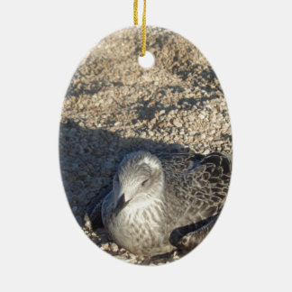 Seagull Enjoying The Sun Summer Photography Ceramic Ornament