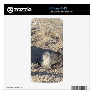 Seagull Enjoying The Sun Summer Photography iPhone 4 Skin