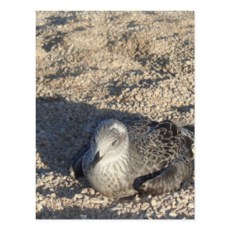 Seagull Enjoying The Sun Summer Photography Postcard