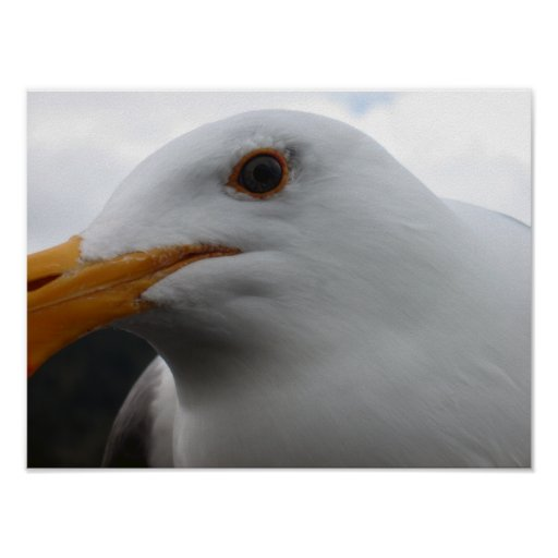 Seagull Face Close-up Poster