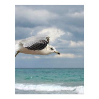 Seagull Flight Full Color Flyer