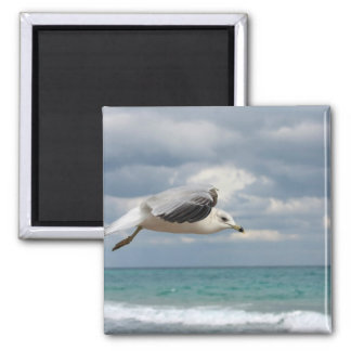 Seagull Flight Magnet