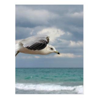 Seagull Flight Postcard