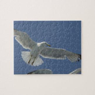 Seagull Flight Puzzle