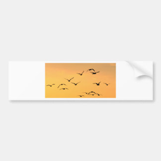 Seagull flying at night bumper sticker