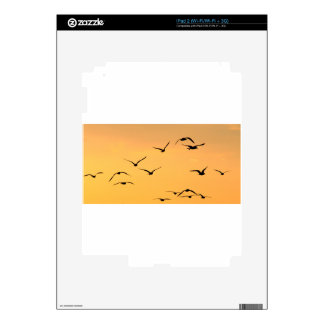 Seagull flying at night iPad 2 decal