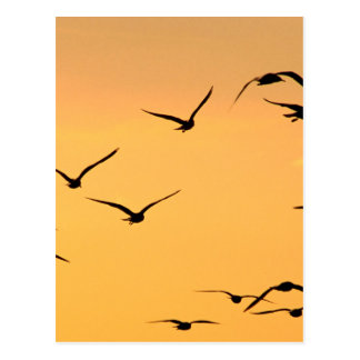 Seagull flying at night postcard