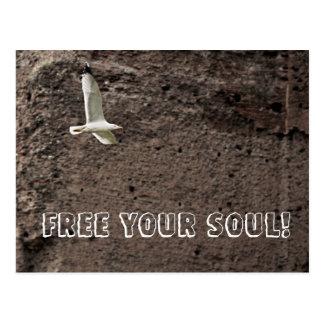 Seagull flying free postcard