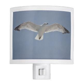 Seagull flying night light