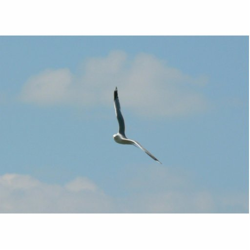 Seagull Flying On Sky High Photo Cut Out