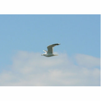 Seagull Flying Over Ocean Cut Out