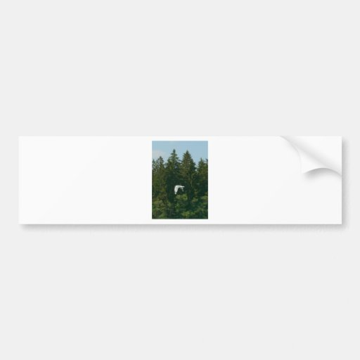 Seagull Flying Over Trees Bumper Stickers