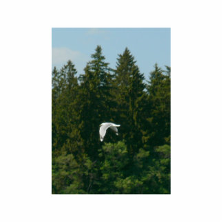 Seagull Flying Over Trees Photo Cutouts