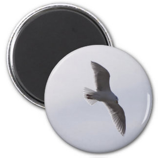 Seagull flying overhead 2 inch round magnet